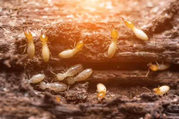 أفضل شركة مكافحة النمل الأبيض بالرياض بأسعار لا مثيل لها